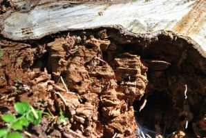 Wood Texture 1 by wolfstockphotos