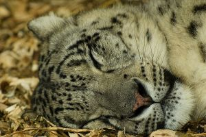 Cat Nap.. by quaddie