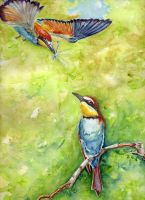 Merops apiaster 2 by imcy