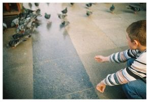 birds and the kid by lomo by fairylike