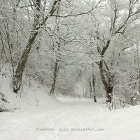 White Forest by Somebody--else