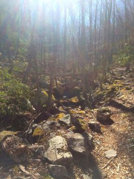 Mine Bank Creek Trail: The Ascent by Edelslav