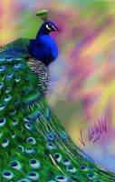 Peacock by Violet-Wolfstorm