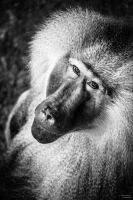 Monkey portrait by rockmylife