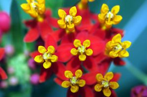Red and Yellow by yoricktlm