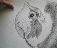 Guinea Pig Rosie Portrait pencil by SomethinSweet