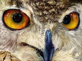 Owl Digital Painting by FireLioness