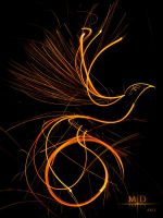 Fire Bird Lightpainting by MD-Arts