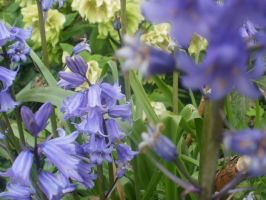 blue bells by zombiemarshmellow