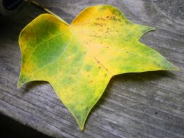 Star Leaf - Angle 1 by MarTiaNOverLorD