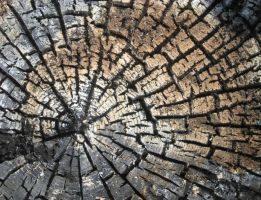 Stock Texture - Charred Wood Stump by rockgem