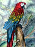 Wonderland- Parrot Hermes by PhoenixWildfire