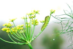 caterpillar by fcw77