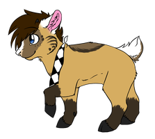 Beka goat by starbuttscoffee