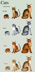 Adopt Cats-Abyssinian- by elen89