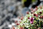 Flowers on the rock by NeoTheOne1987