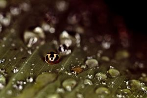 Waterdrops on a leaf V by luka567