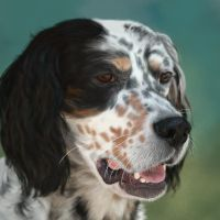 English Setter Portrait by greedy-peri