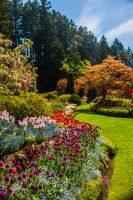 Butchart Gardens by ackbad