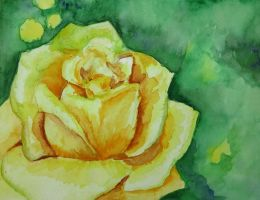 Yellow rose by Lidia-v-Essen