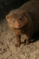 Mongoose by Arctictouch