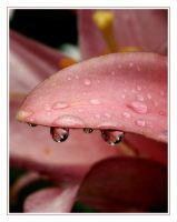 After the Rain -close up- by Gerridwen