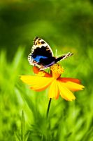 butterfly by dnyphotography23