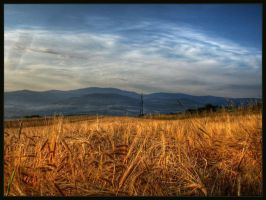 """""""Catcher in the Rye"""" in HDR by Proud-Music-Player"""