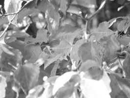 leaves01 by dcretch57
