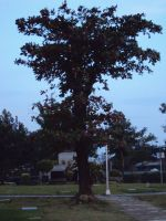 Just a tree by dianerz817