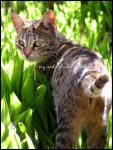 459 by evy-and-cats