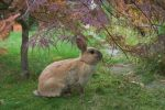 Rabbit under little tree by Tayour
