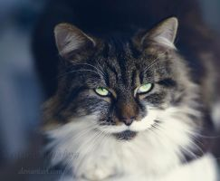 Stare by MadamMewMew