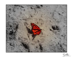 Butterfly by Tantas
