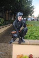 Catwoman - Kitty Cat Perched by Cortana2552