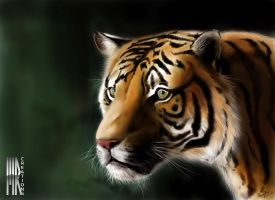 TIGER by turbocharger