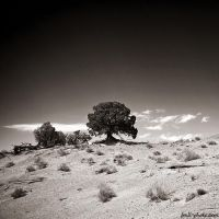 I'm fond of lonely trees by Frall