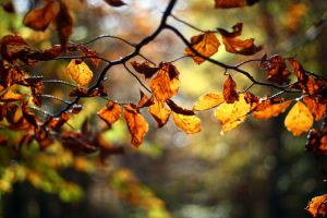 leaves in backlight by BlueFish24