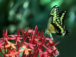 June Butterfly 13 by andras120
