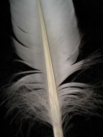feather.3 by twofortheprice