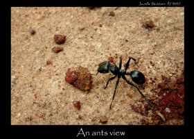 An Ants View by jbongo