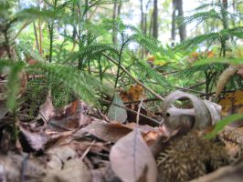 Forest Floor 3 by Salamander-Stock