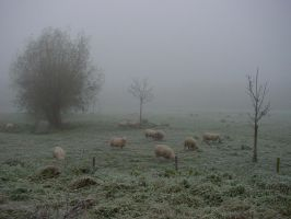 Foggy Meadow by MedeaMelana