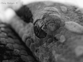 h.island boa eye close up by MaliskaRodgers
