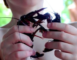 Crawfish Love! :3 by LillaBell
