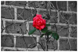 red, green, black and white by Tjabula