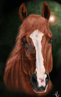 Portrait Chestnut Horse by Auldale