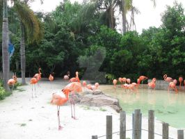 Flamingo Flock by CelticStrm-Stock (21) by CelticStrm-Stock