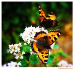 two friends on a flower by Larimara