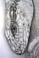 A3 Blue Tongued Lizard Graphite by jintyandrayne